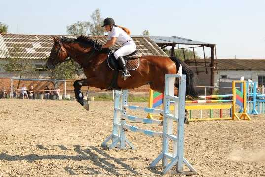 Под Брянском пройдёт первый в сезоне турнир по конному спорту