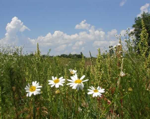В Брянске объявили о наступлении лета