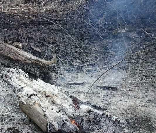 В Суземском районе Брянской области загорелись 10 гектаров леса