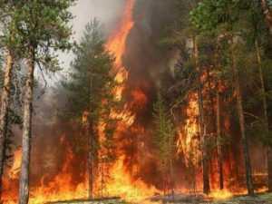 В Брянской области введён особый противопожарный режим