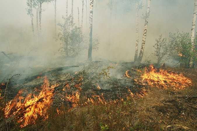 Брянские огнеборцы ликвидировали два лесных пожара