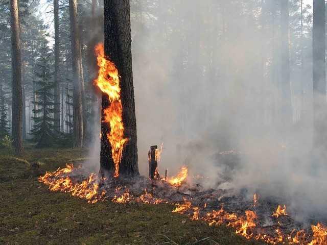 Полдня огнеборцы тушили лесные пожары в Брянском районе