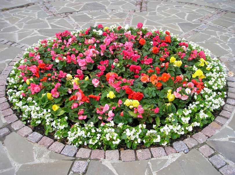 В Брянске высадят 168 тысяч устойчивых цветов