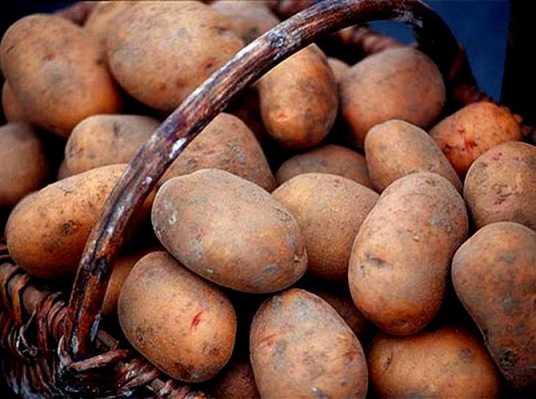 Брянского мошенника отправили в «зону» за аферу с картошкой
