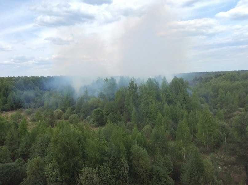 Около брянских многоэтажек горит лес