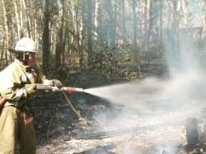 Крупный пожар произошел в брянском лесу