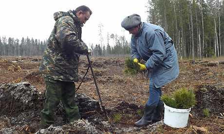 Брянские леса увеличились на 10,5 миллиона елей, дубов и сосен