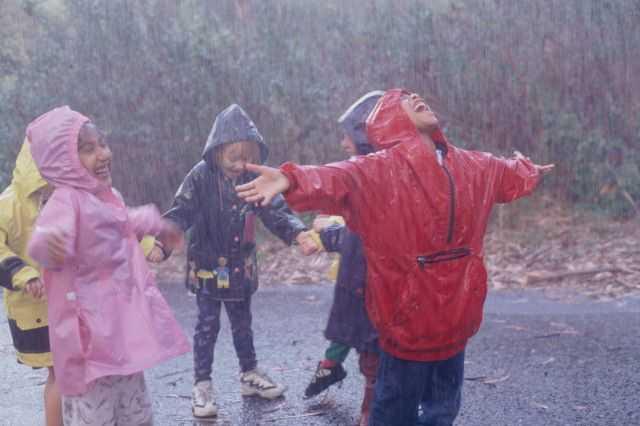 На Брянскую область обрушатся дожди и грозы