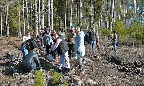 В брянском «Лесу Победы» будут расти 200 000 сосен, елей, берез, дубов