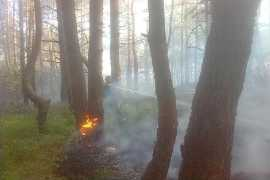 Крупный лесной пожар потушили в Брянском районе