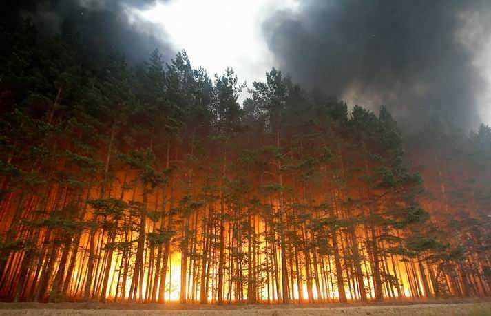 Сухая погода возвратила в Брянскую область лесные пожары