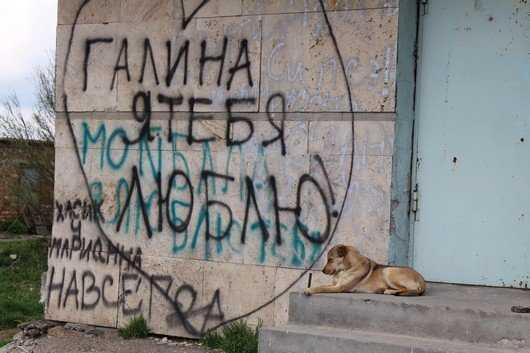 В Брянске жители Новостройки подверглись нападению собачьих стай