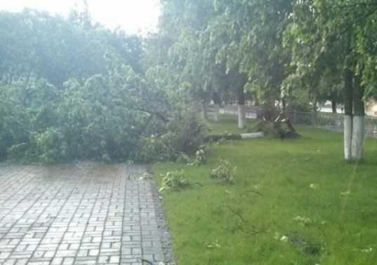 В Брянске дерево рухнуло на маршрутку – пострадала женщина