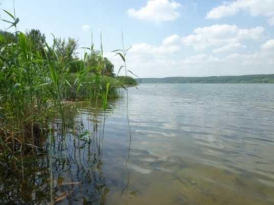 В брянском озере обнаружили тело мужчины