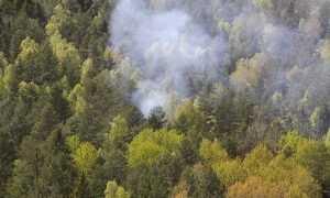 В брянском лесу установили видеокамеры и сигнализацию
