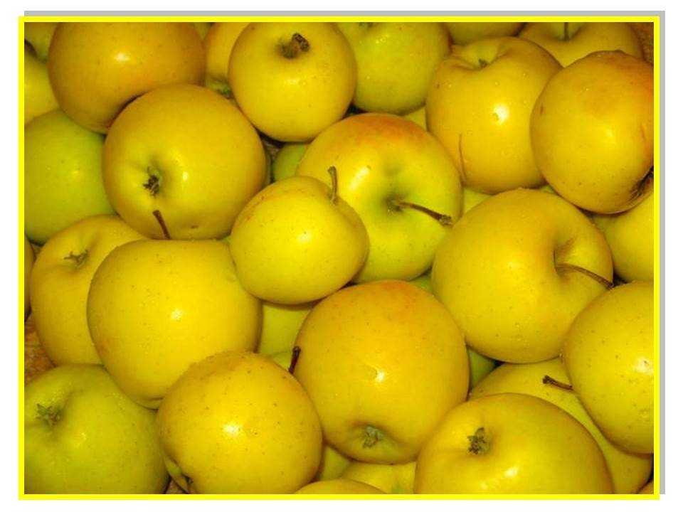 Брянские инспекторы уличили Польшу и Белоруссию в реэкспорте яблок