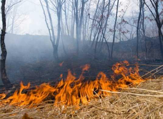 На Брянщине сократилось количество лесных пожаров