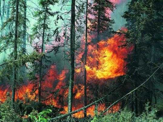 В навлинском лесу потушили пожар