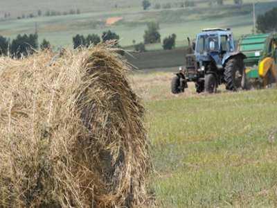 Брянского фермера наказали за обман государства