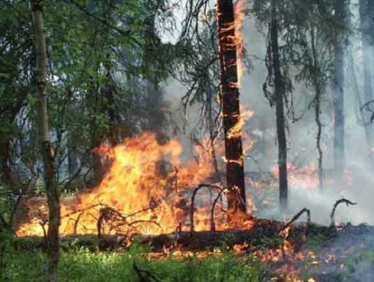 В Навлинском районе потушили второй за сутки лесной пожар