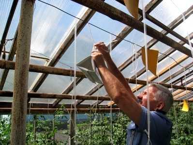 Брянская агрофирма «Культура» попала под карантин и угрозу банкротства