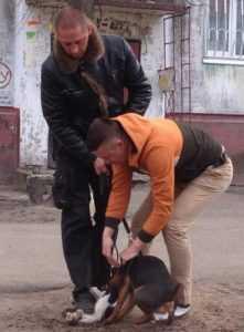 Брянца, чей пёс растерзал кошку, оштрафовали на тысячу рублей