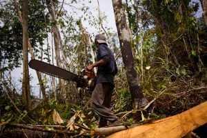 Руководитель брянского предприятия ответит за незаконную вырубку леса