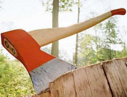 Брянский чиновник ответит за вырубку леса на 50 миллионов рублей