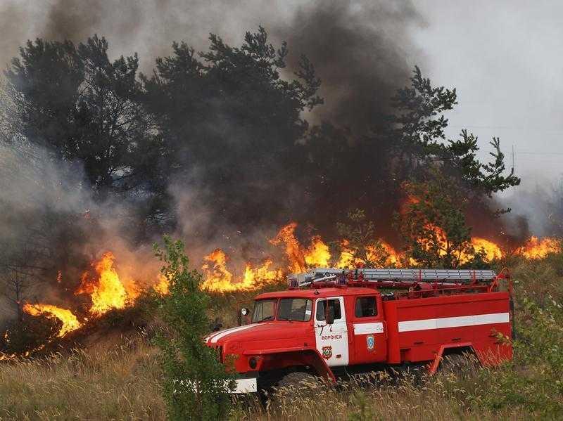 Во время пожара в брянском лесу взорвалась бомба