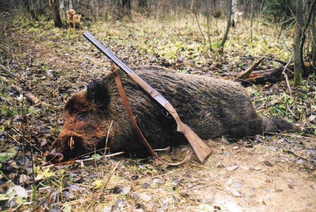 За незаконную охоту ответят 27 брянских браконьеров