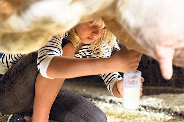Строителям молочных ферм в Брянской области возместят треть затрат