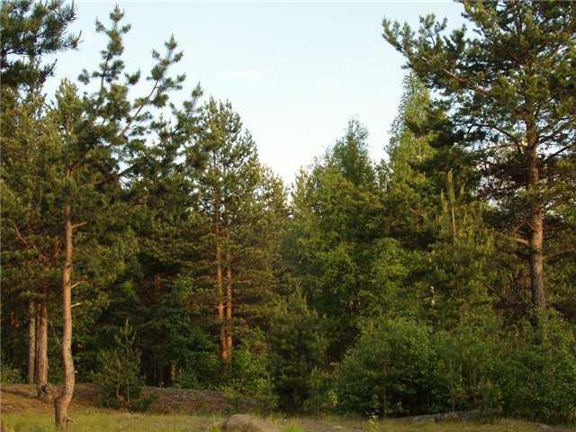 Брянский суд отобрал кусочек леса у частника