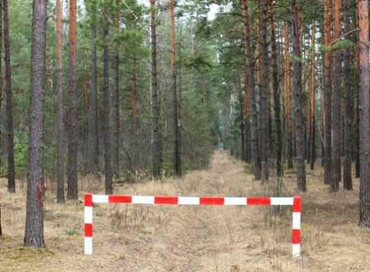 За костры в лесах наказали четверых брянцев