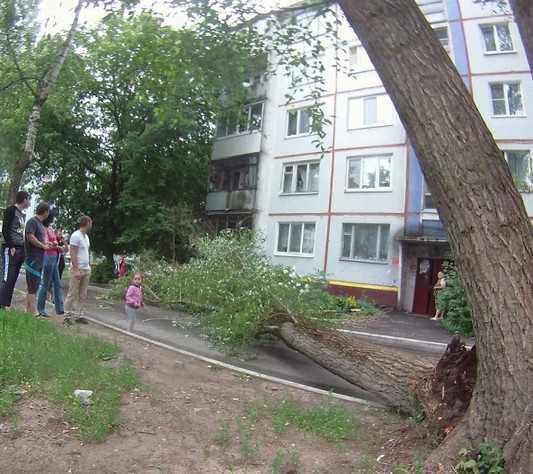В Брянске рухнувшее дерево разнесло балкон дома