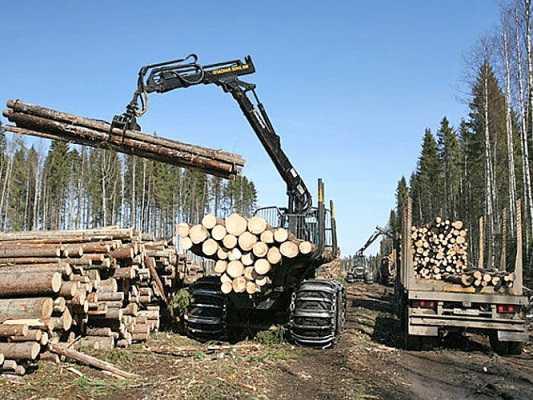 В Брянской области расследуют гибель человека  при заготовке леса