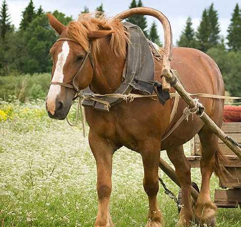 Попавший под лошадь брянский подросток отделался царапинами