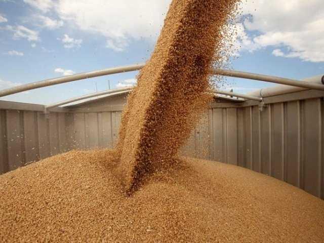 По Курской области запретили провозить брянскую пшеницу