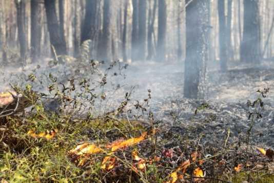 Возле брянского посёлка потушили торфяной пожар