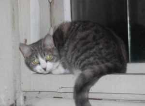 Брянец ответит за убийство кошки на глазах у подростка