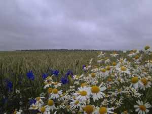 После двух дождливых дней в Брянск вернется солнечная погода