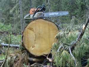 Брянский лесоруб ответит за гибель парня, убитого деревом