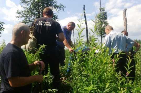 Внучка заблудившейся брянской ягодницы поблагодарила её спасителей