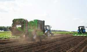 Брянские крестьяне увеличили посевные площади