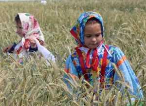 На брянский День поля к Добронравову приехала тысяча гостей