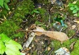 На окраине Брянска нашли мину