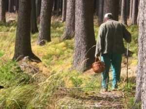Потерявшийся брянский грибник нашёлся в ярославском лесу