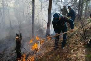 В брянском лесу потушили торфяной пожар