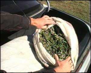 Брянская полиция задержала пассажира авто с килограммом марихуаны