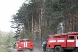 Лесной пожар произошел на юге Брянской области