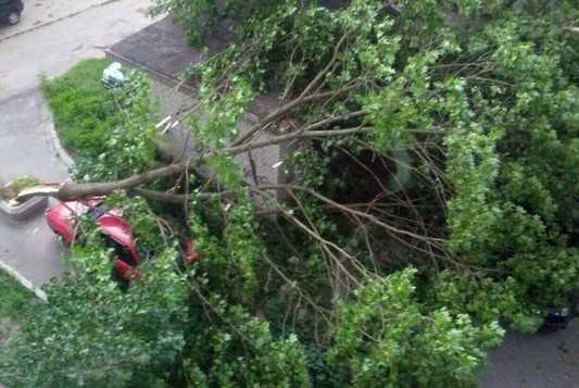 В Брянске поваленные ураганом деревья рухнули на автомобили